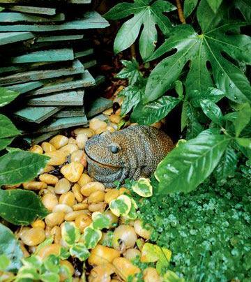 追求自然效果 打造英式风格的园艺