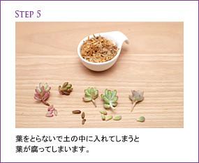 用水苔制作微型多肉植物组合盆栽的步骤