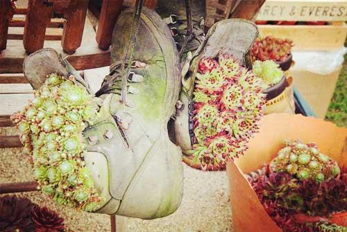 改造旧鞋子 将多肉植物种进鞋子里