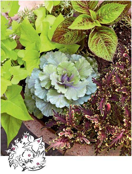 组合观叶植物盆栽要点 教你打造盆栽组合