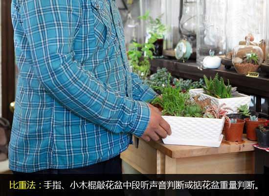 如何判断绿植需要浇水及绿植浇水原则