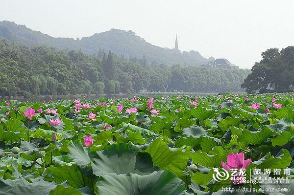 赏荷季 盘点杭州最美的风雅赏荷地