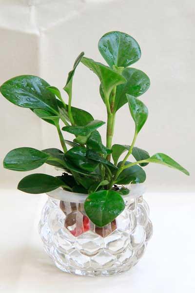 植物达人教你养好水培植物的要点和窍门