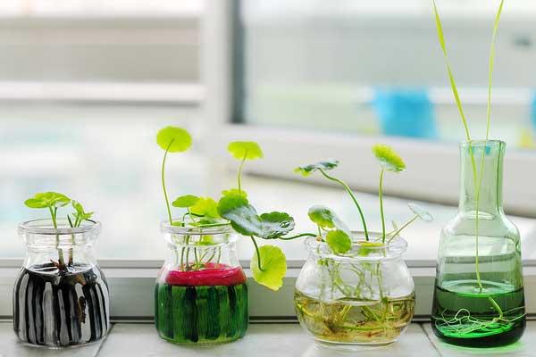 那花园-水培植物的种植养护方法与注意事项