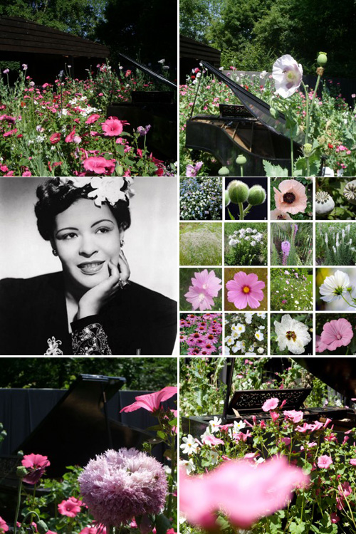 色彩夺目 唯美浪漫的花园景观设计