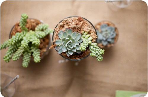 简单五步用废弃的玻璃罐儿制作多肉植物盆栽