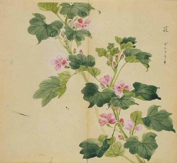 日本手绘植物:诗经植物图解