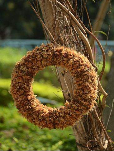 玩出不一样的创意 巧手DIY多肉植物花环