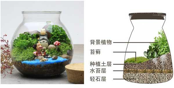 苔藓微景观的种植方法和注意事项
