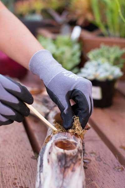 多肉植物树桩花器的制作方法与步骤