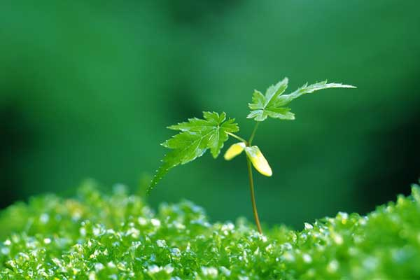 绿色植物神奇的保健作用