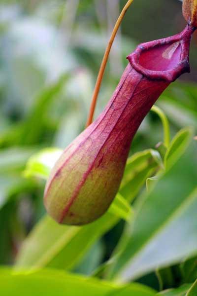 自然界十大奇异植物 你见过几个?