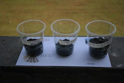 花友分享:朱顶红种子的播种方法与播种后的管理