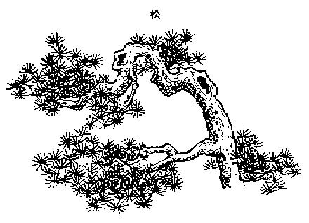 中国十大传统吉祥植物寓意