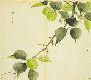 《诗经》中的植物种类众多 植物总关情