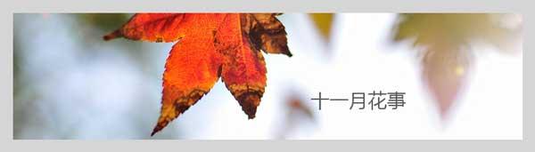 十一月花卉养殖方法