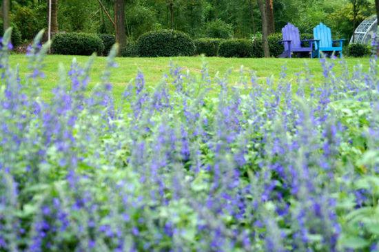 令人沉醉的紫色花田 上海周边薰衣草园推荐