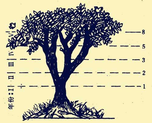 神奇的大自然:大自然里的裴波那契数列