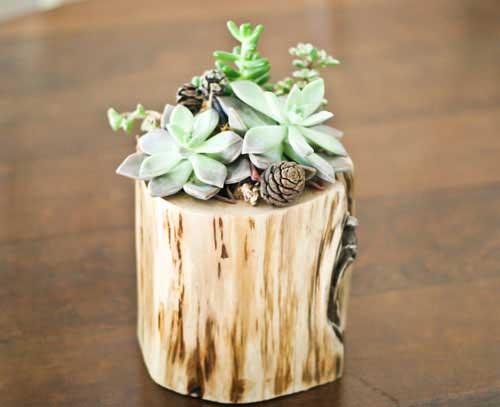 生活的花器 手工制作多肉植物小木桩