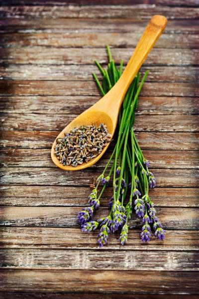 薰衣草的作用及在疾病治疗中的运用