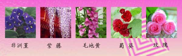 花语大全:象征爱情的花卉花语