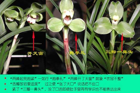 鉴赏兰花的专业术语解读