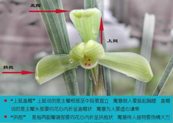 兰花鉴赏:兰花的欣赏方法与标准