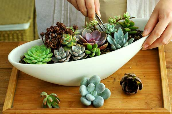 如何制作漂亮的、打动人心的组合盆栽