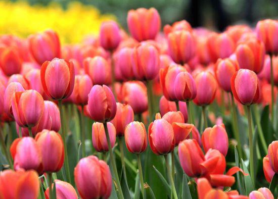 赏花正当时 四川5大最美的赏花地点
