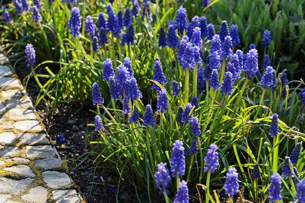 各个季节开花的植物大全 让花园四季都有美景