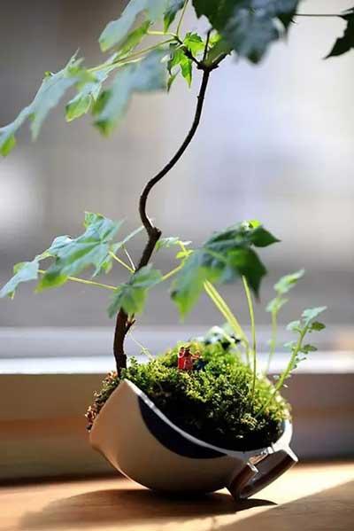 绿植的新玩法——苔玉盆景