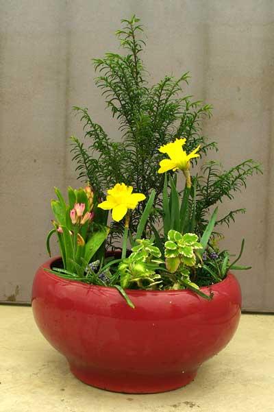 打造私家小花园 组合盆栽的制作方法与养护