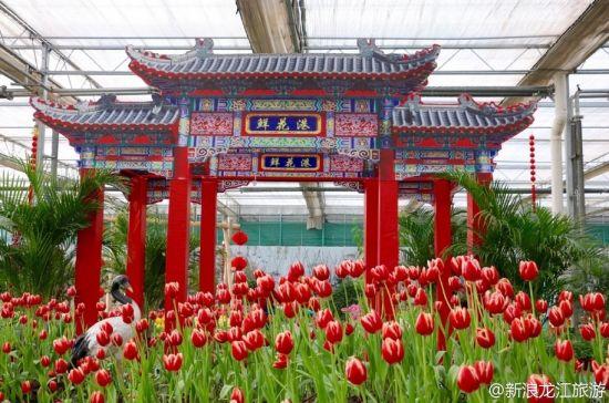 黑龙江3大室内赏花地 姹紫嫣红花自开