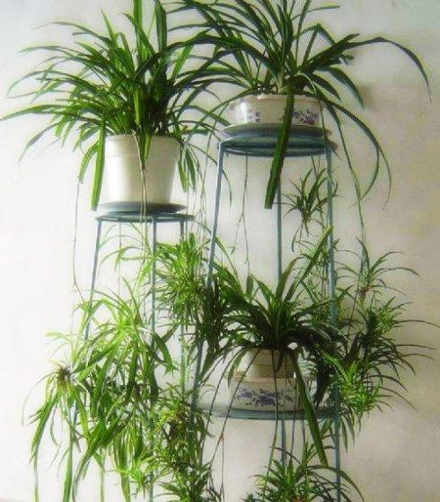 耐阴耐湿 适合卫生间摆放的绿植推荐
