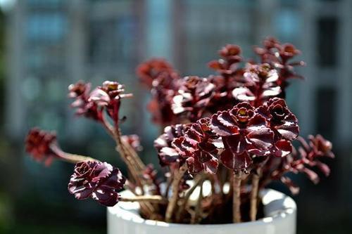 不会凋谢的爱意 那些代表浪漫的多肉植物