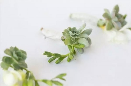 给新郎一款专属胸花 DIY多肉植物胸花