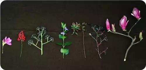 茶席生命的丰盈 茶席插花的花器花材与结构布局