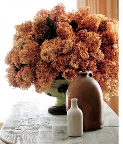 """用花卉装点色彩缤纷的家 让家""""绽放"""""""