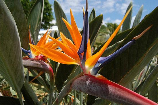 10种地球上最美的花儿