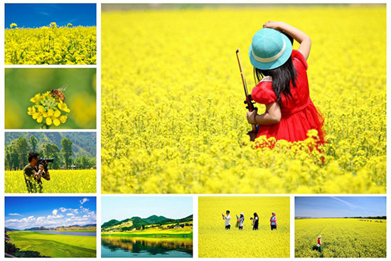 六月辽宁最值得去看的油菜花景点推荐