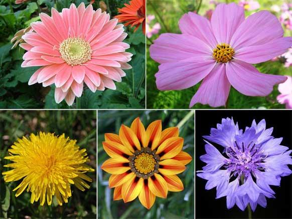 常见花卉中那些像花却不是花的种类