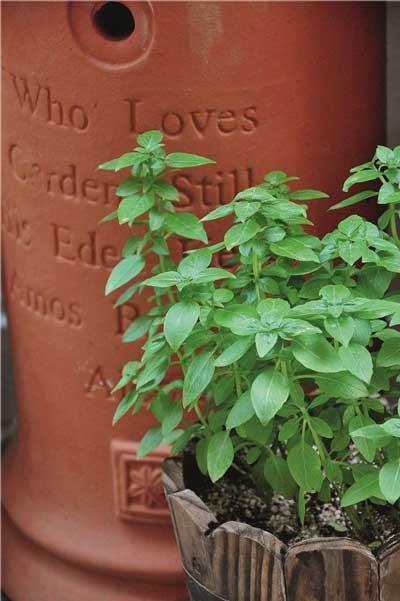 夏日的花园香气 建造属于自己的香草花园