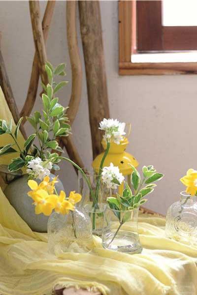 夏季治愈系 用黄绿色系植物装扮你的家