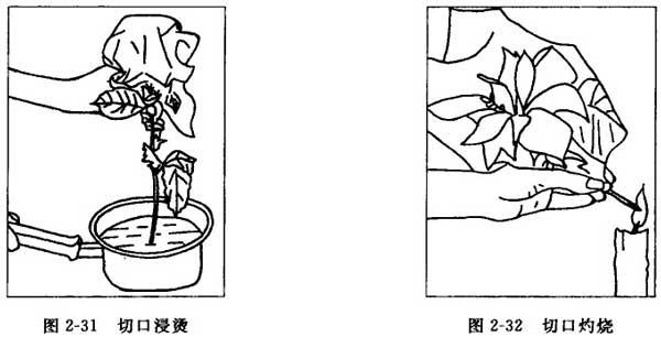 插花技巧:插花时花材切口的处理方法