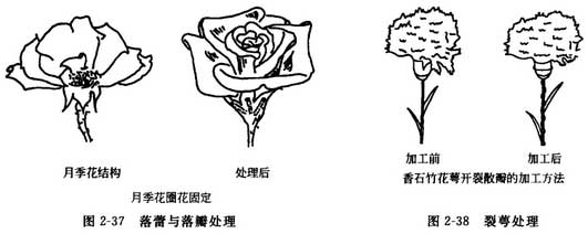 插花基本功:插花时花材的修剪与加工处理方法