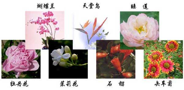 象征幸福的花卉及花语介绍