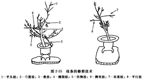 艺术插花中枝材(枝条)的修剪与弯曲方法