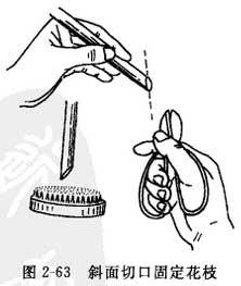 艺术插花的花材固定方法:盆类容器的固定方法