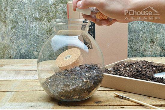 方寸之间的魅力 超详细的苔藓微景观DIY教程