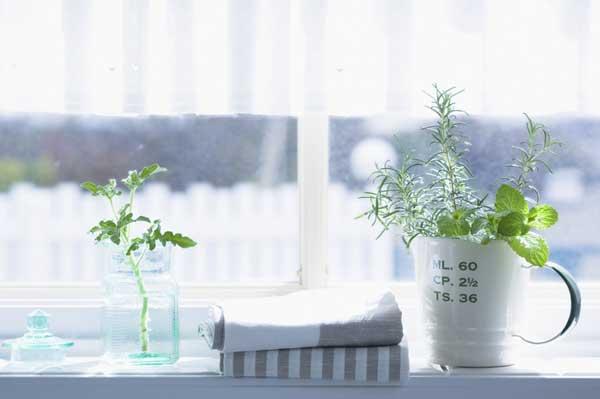 家居绿植选择养护注意事项及不同空间绿植配置